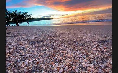 Las conchas de Gonzalo Abarca
