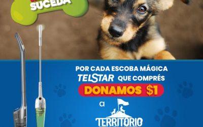 Perritos rescatados seguirán recibiendo cuido adecuado por alianza de TelStar y Territorio de Zaguates