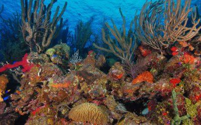 Piden suspender la exportación de especies marinas en peligro de extinción
